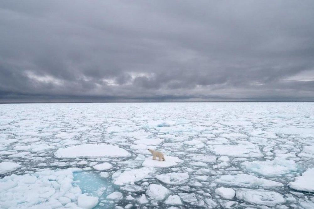 L'Arctique a connu l'une de ses années les plus chaudes