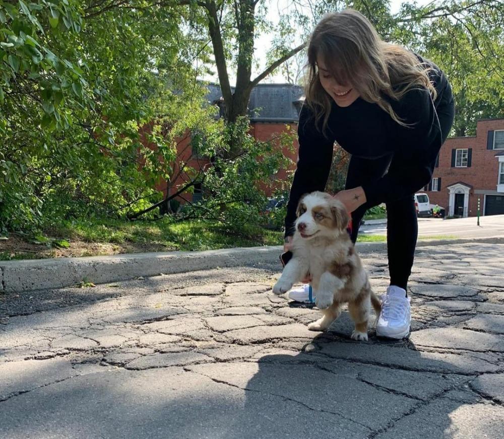 COVID-19: les adoptions d'animaux en hausse au Québec